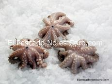 Pulpo Pequeo